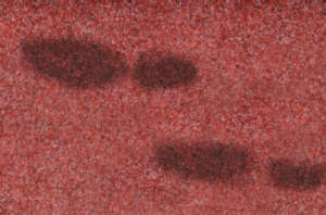 Oil Based Stains Test Gainesville GA 770-965-7079